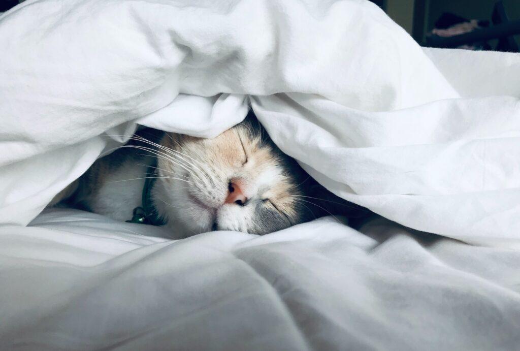 寝ているねこ